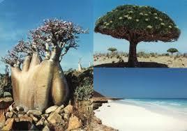 http://www.google.ch/images?q=tbn:hnI9Sy_3mjAP_M::www.cifr.it/Socotra%252520front2.jpg&h=78&w=111&usg=__5IdcC4Oeatw1cqXkCN89Kblqbmo=
