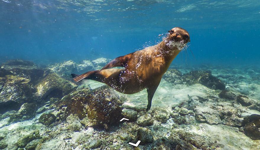 Galapogos Islands Google Map